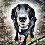seattle dog walking reviews